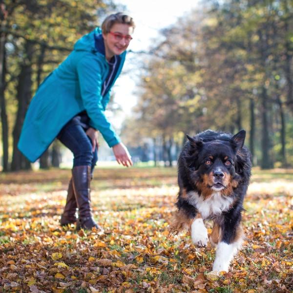 Angebote Hundetraining