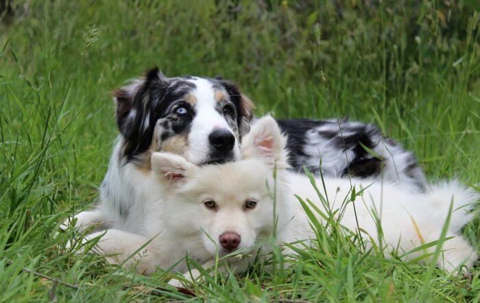 Artgerechte Hundehaltung