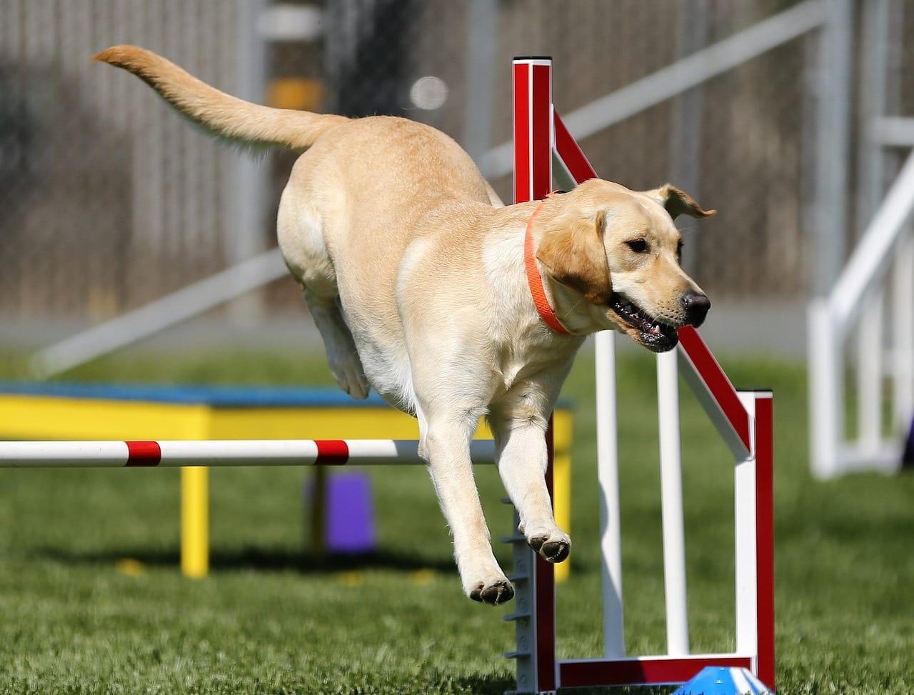 Hundetrainer oder Hundeschule